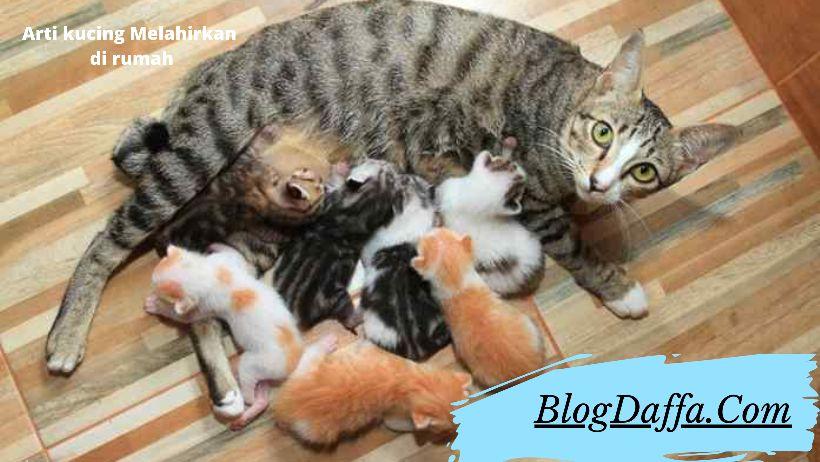 Arti Kucing Melahirkan di Rumah Kita Menurut Pandangan Islam