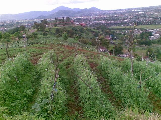 Foto%25285328%2529 Jual Tanah Di Puncak 2, Murah Jual tanah di cipanas jual tanah di puncak jual tanah di puncak2