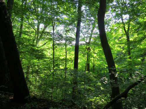 O'Neill Woods trail