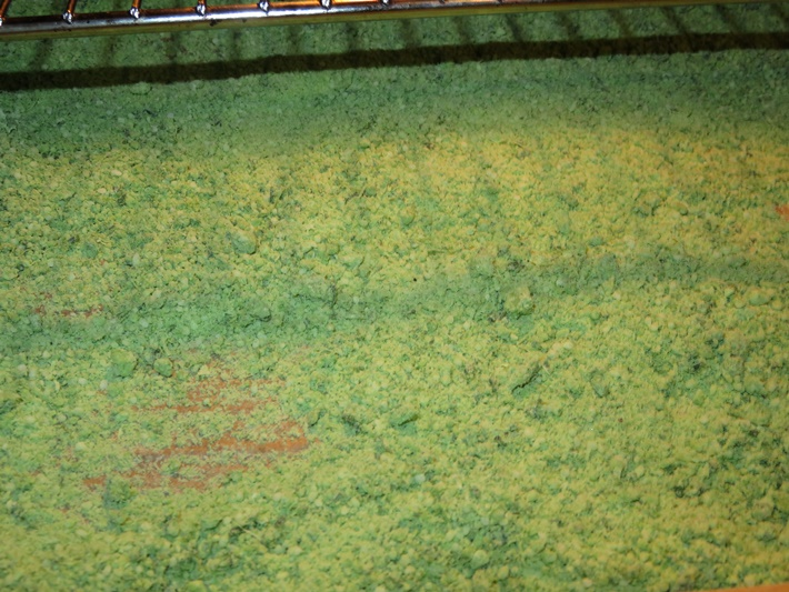 Bärlauchsalz zum Trocknen auf dem Blech