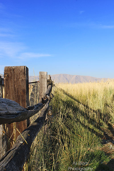 weathered farm split rail fence field and mountain in distance