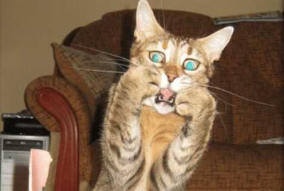 Bikin Gemes! Potret Tingkah Kucing Ini Juga Penuh Dengan Drama