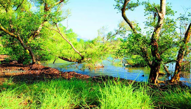 National Park West Bali