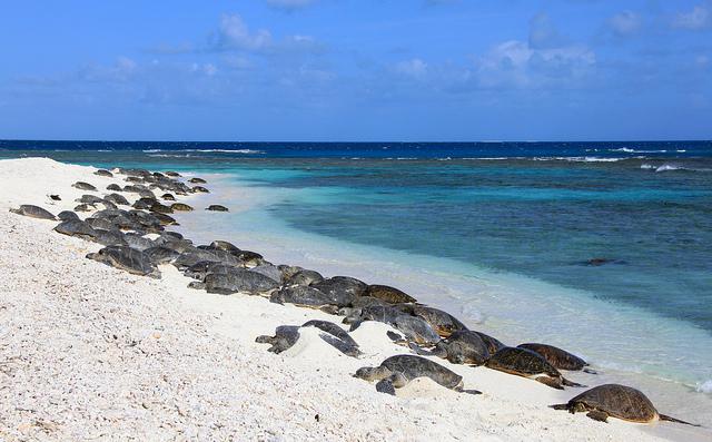 reserva-marina-hawai