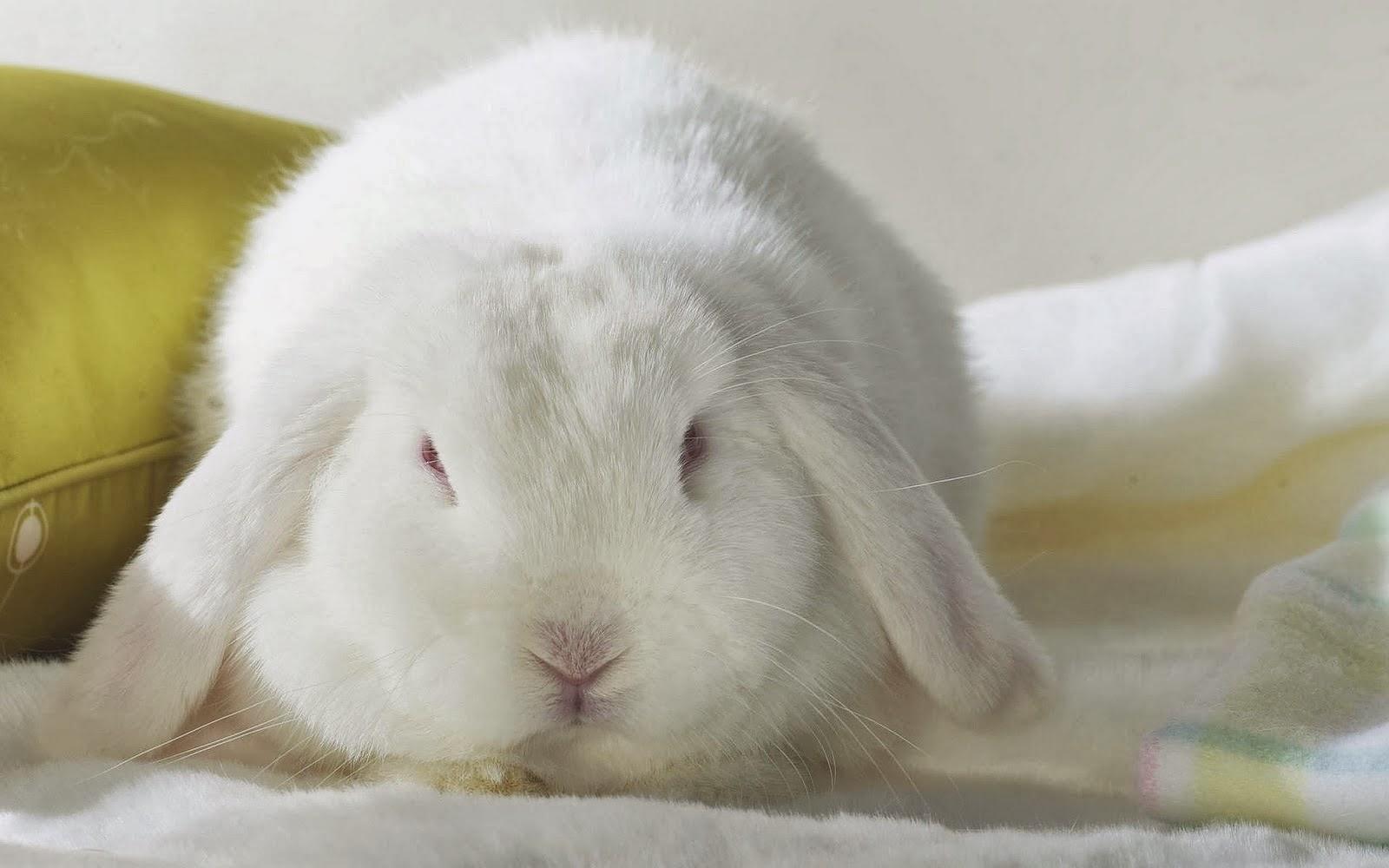 Cute 3d Wallpapers Rabbit Desktop Hd Wallpapers Free Downloads Beautiful Baby