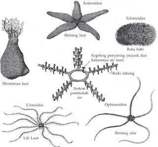 Jenis-Jenis Hewan Echinodermata