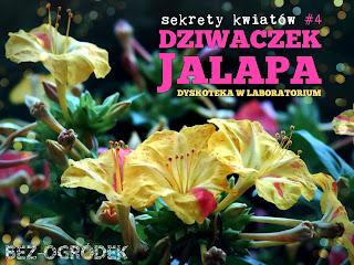 kwiaty dziwaczka i jego tajemnice