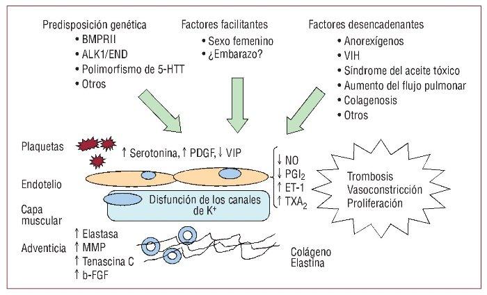 TeresaMuñoz Cueva: PCR EN EL DIAGNOSTICO DE MUTACIONES EN..