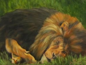 """Lion Around"", sleeping male lion"