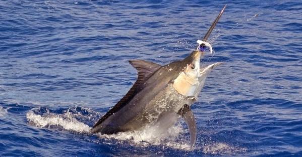 Menilik Jenis Kail Pancing yang Kuat Mampu untuk Menarik Ikan dengan Ukuran Besar