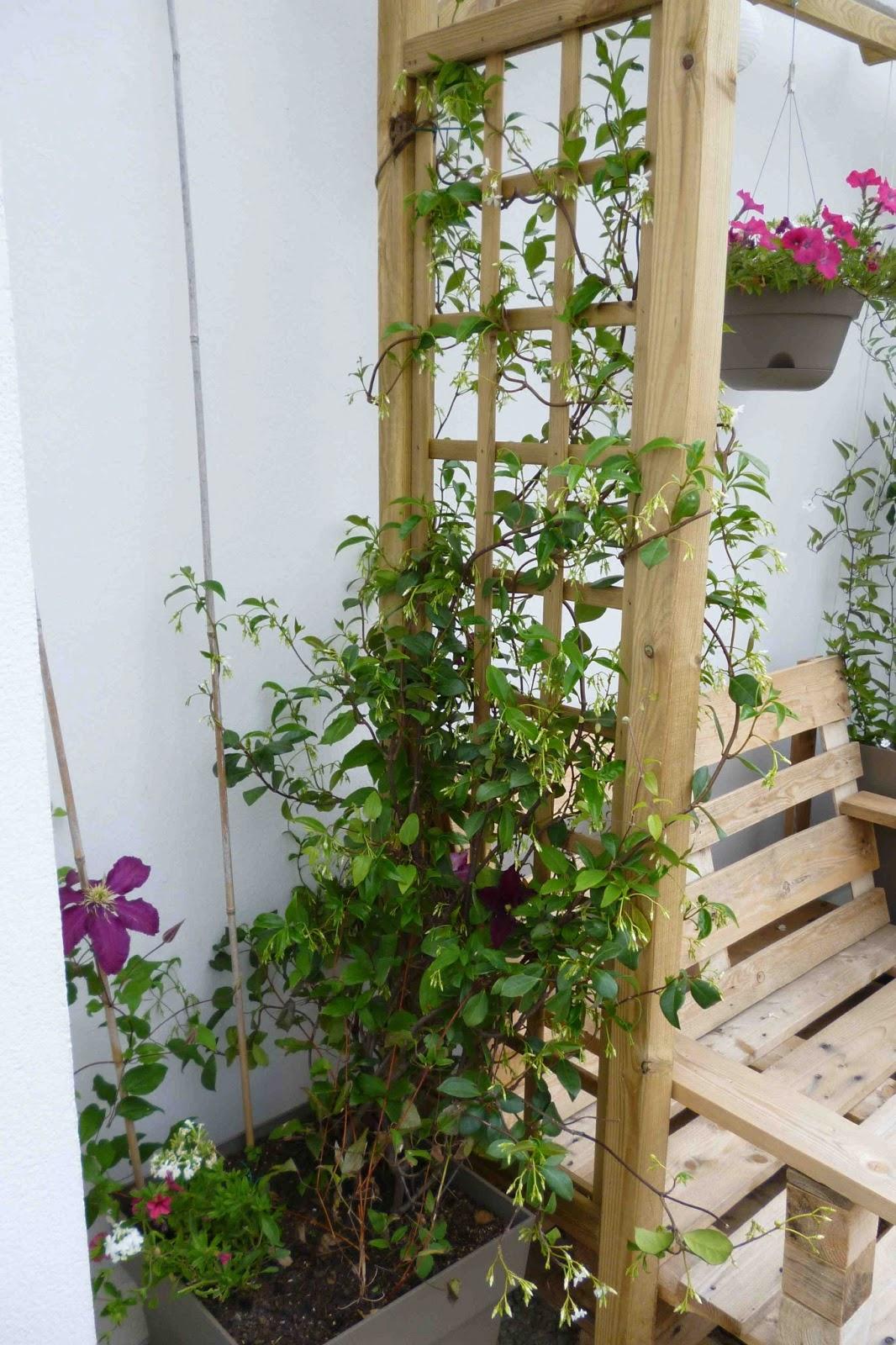 la m tamorphose du balcon plantations sous la grisaille. Black Bedroom Furniture Sets. Home Design Ideas