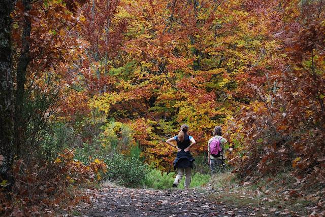 Dos chicas paseando por un sendero en un bosque otoñal