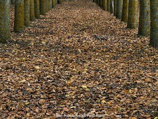 Juzbado, otoño, premios, concurso de fotografía rural el otoño en Juzbado