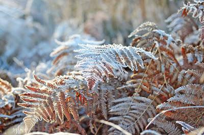Winter Wahner Heide! NRW by Sylwia Schreck