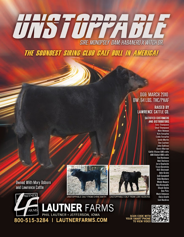 Unstoppable – The Soundest Siring Club Calf Bull in America