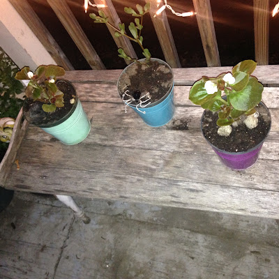 Re-purposed Old Wooden Coffee Table for Container Garden Vertical Build
