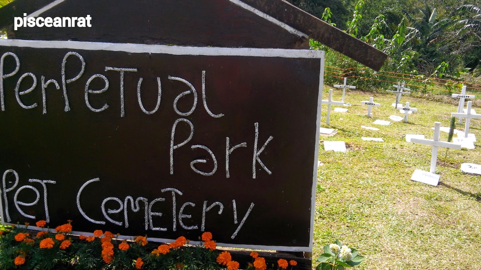 paradizoo, perpetual pet cemetery,