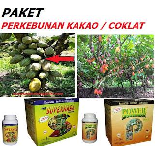 pupuk organik penyubur tanaman kakao / coklat,obat kakao,obat penyubur kakao,pupuk coklat,pupuk kakao,pupuk penyubur tanaman coklat,pupuk penyubur tanaman kakao,