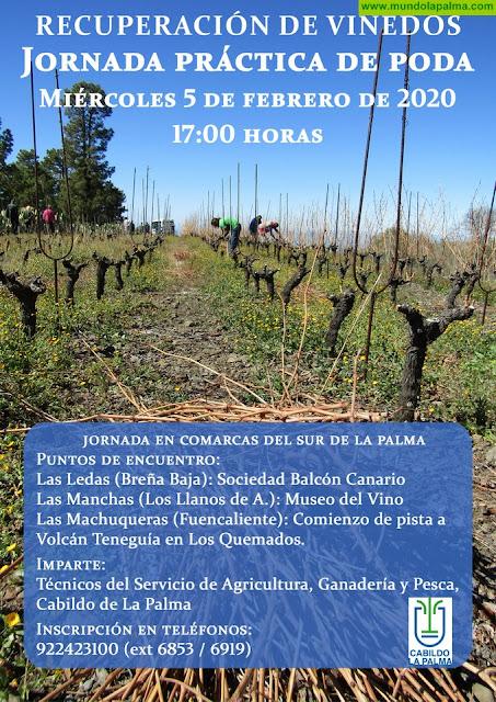 El Cabildo organiza una jornada práctica dedicada a la poda de viñedo