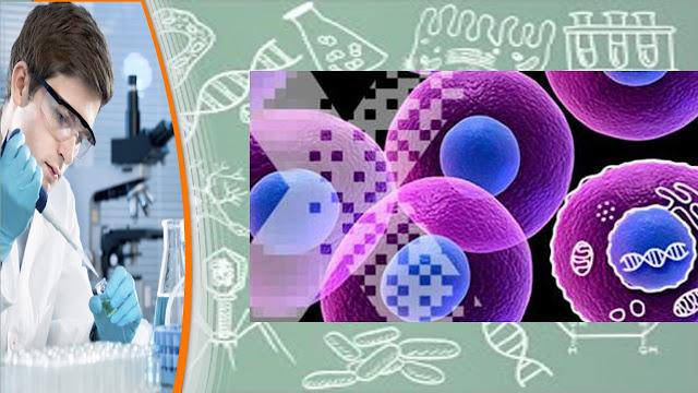 tipos de celula en sere humanos