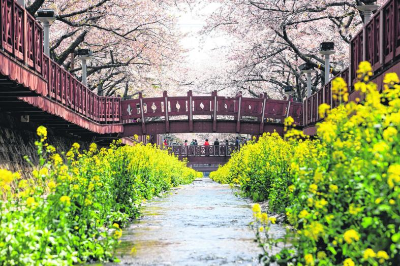 Top flower-viewing spots to visit as spring arrives