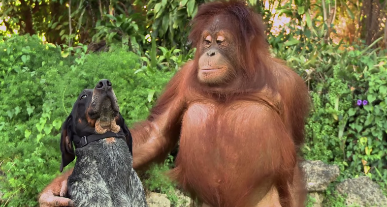 Unlikely Animal Pairs Defy Laws of Nature in Adorable new Android Friends Furever Ad