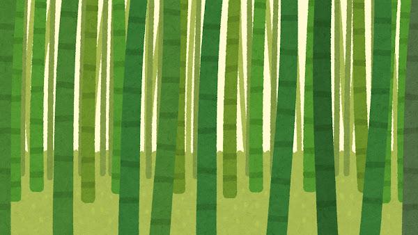 竹やぶのイラスト(背景素材)