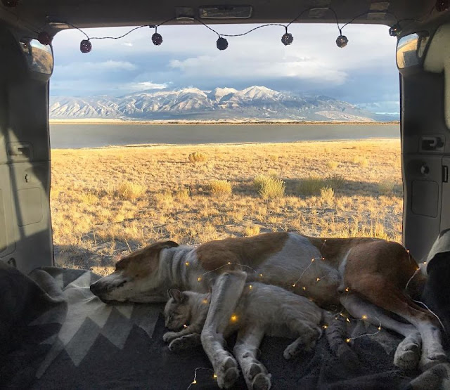This Cat And Dog Love Travelling Together, And Their Pictures Are Absolutely Epic :