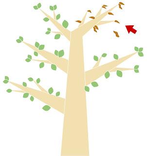 樹頂局部枝葉枯萎