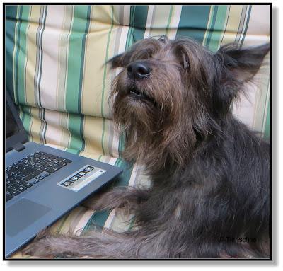 auf der Suche nach fettarmem Hundefutter