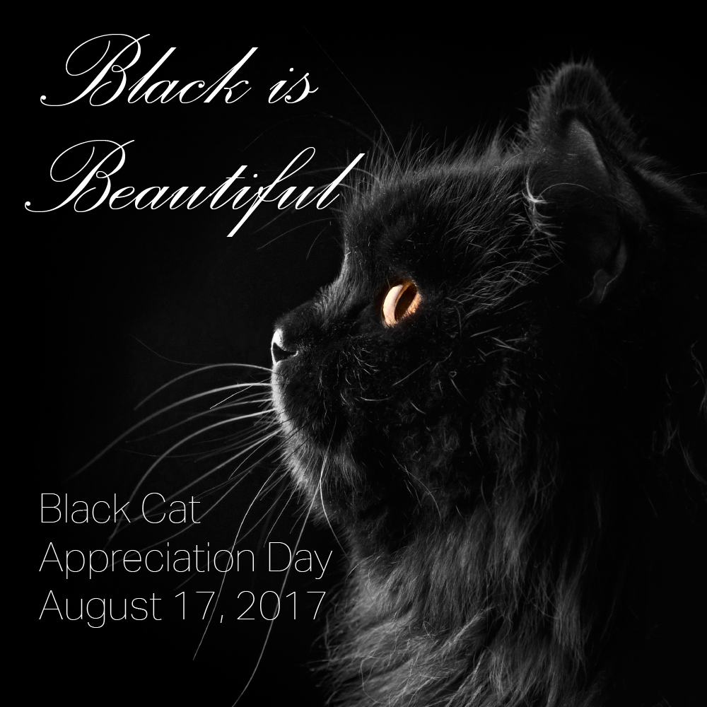 The Cuddlywumps Cat Chronicles Black Cat Appreciation Day 2017