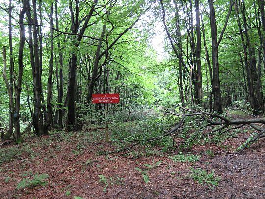 """Rezerwat przyrody """"Bukowica""""."""