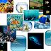 17 papéis de parede de peixes e efeitos de água no seu celular grátis!