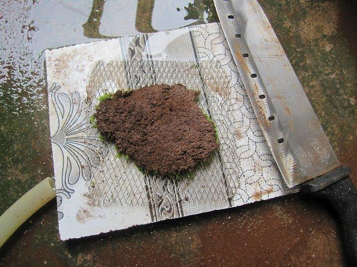 kinh nghiệm xử lý mini fiss thủy sinh bám đất lá cạn -  đặt lên vĩ inox