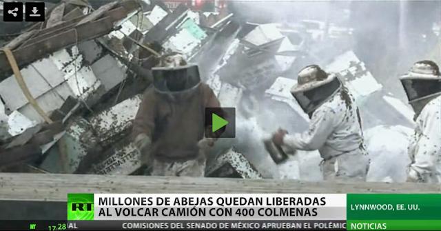 Κόλαση: Φορτηγό με 400 κυψέλες ανετράπη και εκατομμύρια μέλισσες σκόρπισαν στον δρόμο VIDEO