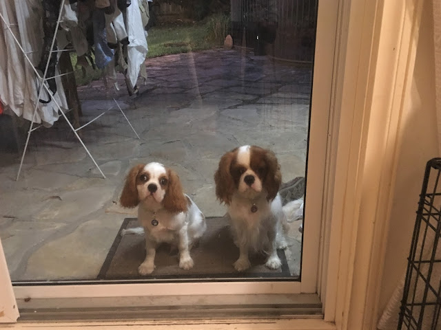 Darcy and Ava sit outside behind glass door