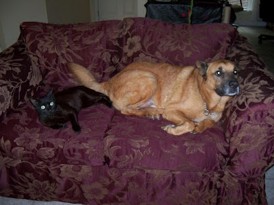 George our black cat & Buddy our dog