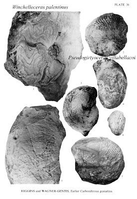 Winchelloceras palentinus