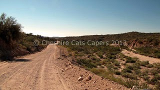 Cheshire Cats Capers: Box Canyon, Wickenburg