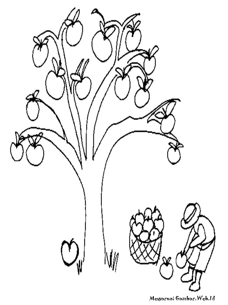 Aneka Gambar Mewarnai Pohon Mangga