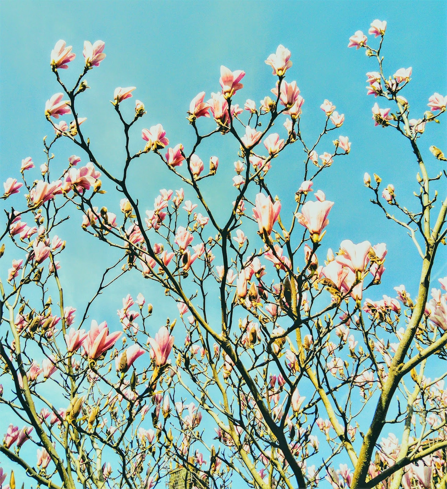 artangel welcome back spring