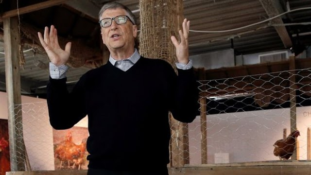 Bill Gates launches chicken plan to help Africa poor