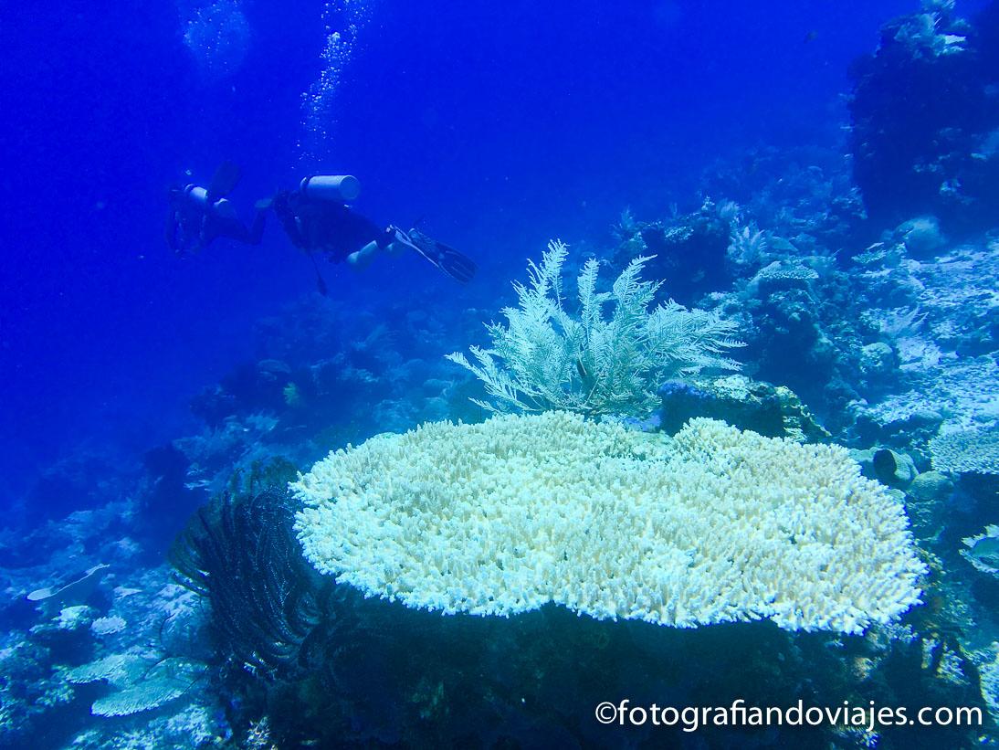 Buceo en Komodo Labuan Bajo