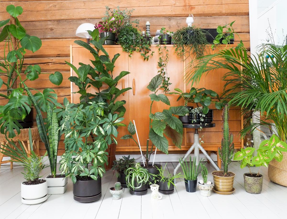 Viherkasvit, vihersisustaminen