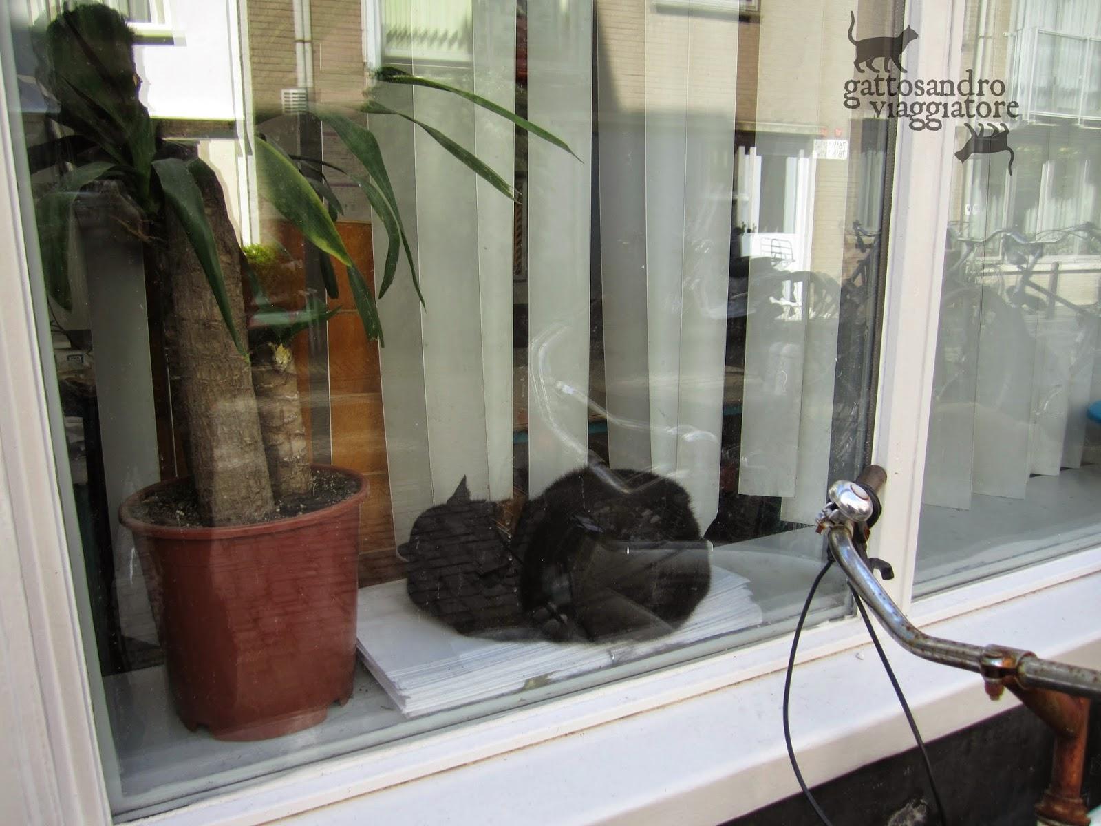Gatto nero alla finestra