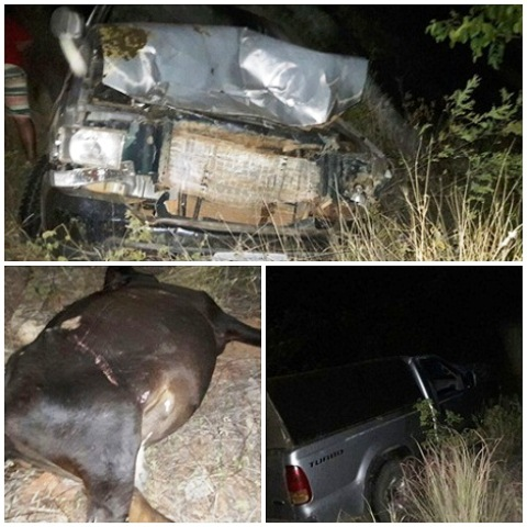 Jussiape/Rio de Contas Animal solta na pista provoca acidente na BA-148