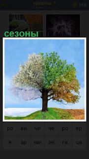 стоит дерево с разными сезонами погоды и смены климата