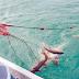 Nelayan Pesibar Diklat Sektor Kelautan