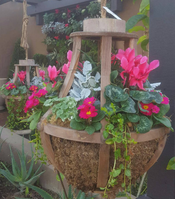Ciao newport beach winter flowers i spotted these yesterday at the entrance of rogers gardens pretty deep pink cyclamen and primrose flowers really pop against the green and gray foliage mightylinksfo