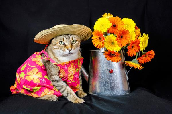 """Chú mèo """"người mẫu"""" có phong cách thời trang vạn người mê"""